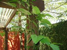Minhas fotos,meu jardim