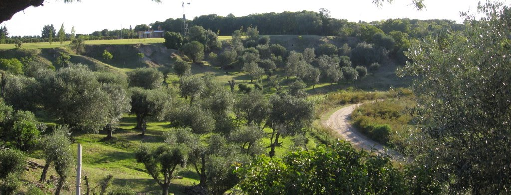 Panoramica de olivares