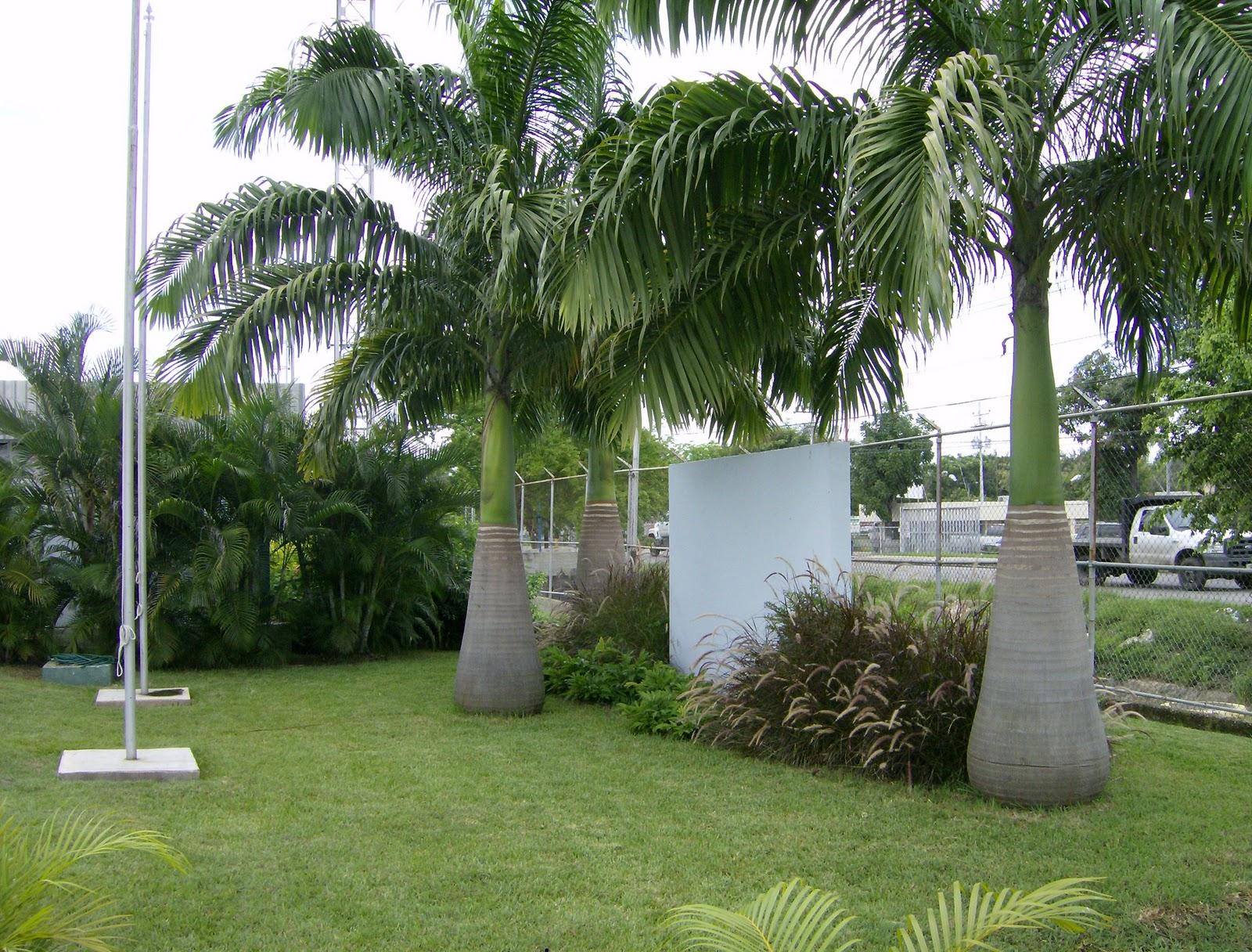 Jard n bamb c a jardines de energyworks venezuela s a for Jardin bambu