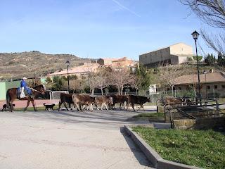 Pastores Aragoneses