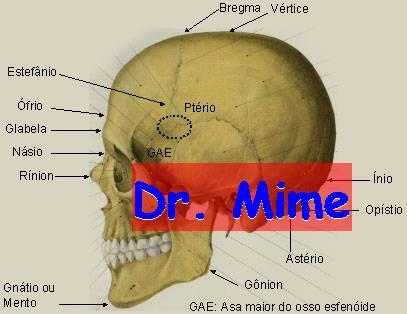 El blog neuroanatomico del Dr. Mime: BASE DE CRANEO
