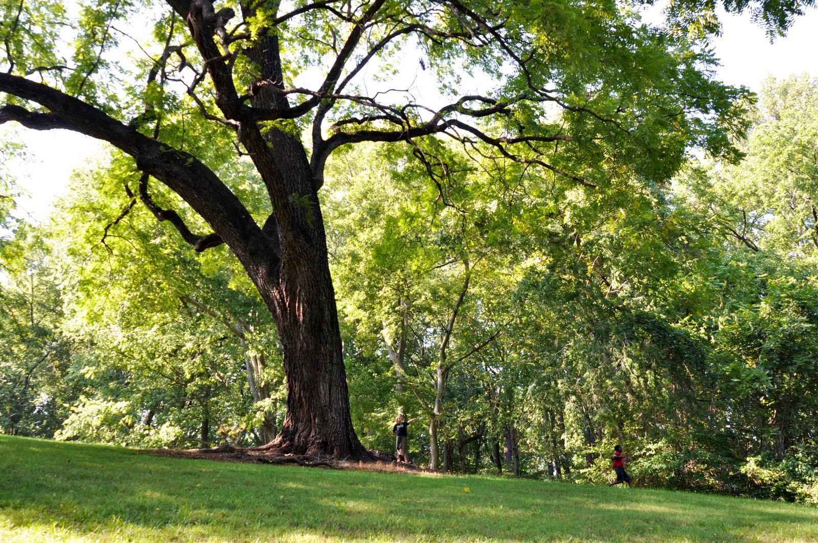 """the black walnut tree Mary oliver's """"the black walnut tree"""" addresses the theme of keeping tradition over forcing change, its complexity being shown through its use of tone, structure, and sound which contribute to the overall idea of tribulation."""