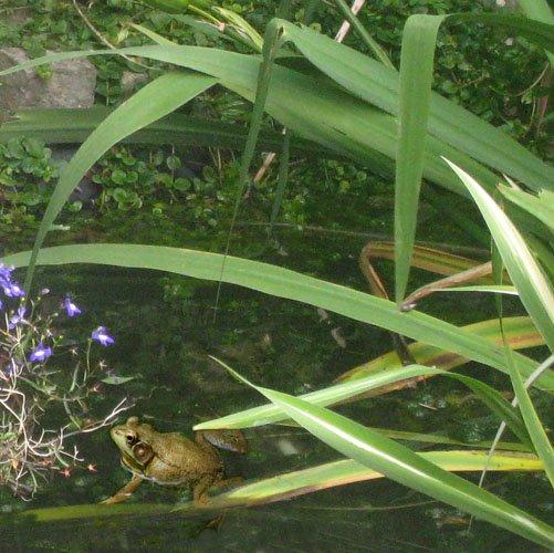 [frogs_01.jpg]