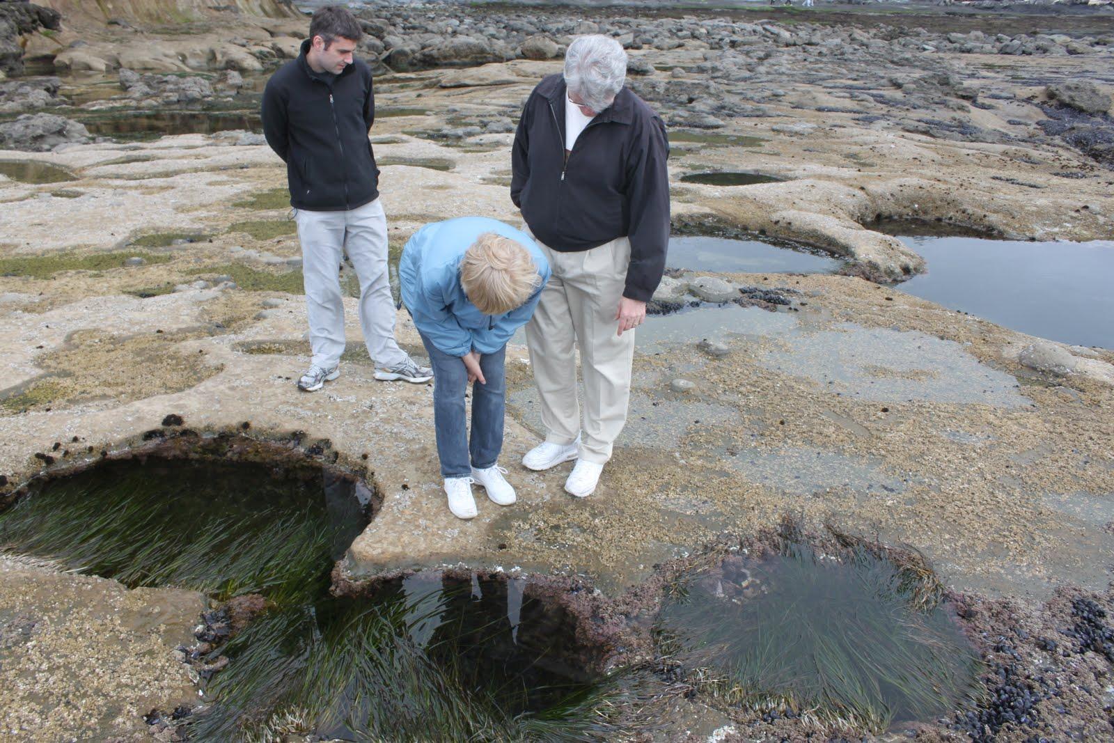 Best kept secrets of victoria at low tide a whole shelf of the rocky coastline is exposed leaving hundreds of large tide pools nvjuhfo Images
