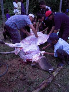 daging lembu korban dilapah