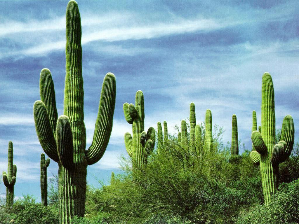 Un post de cactus un megapost taringa for Clases de cactus