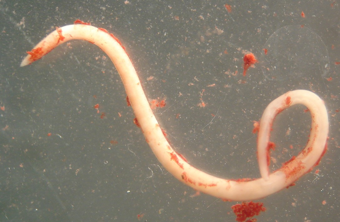 Parasite of the Day: April 2010