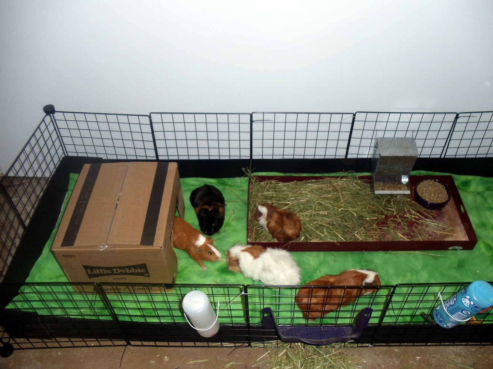 Hedgehog cage for sale baby african pygmy hedgehogs for for Diy guinea pig cages for sale
