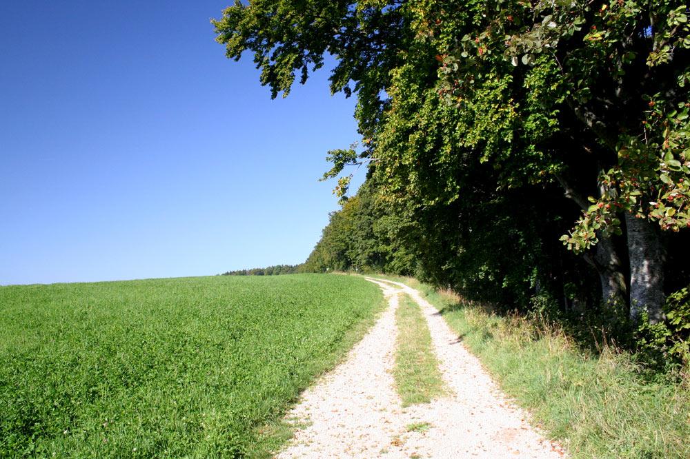 La route, ils grimpèrent à leur tour le talus élevé dont la