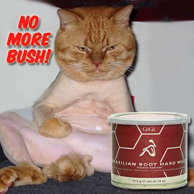 brazilian-waxed-pussy.jpg