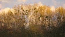 Herbst in Zernikow