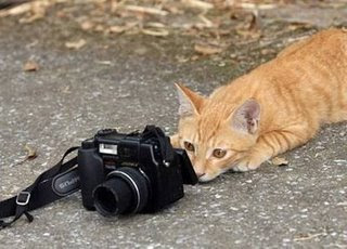 really funny cat can take photos