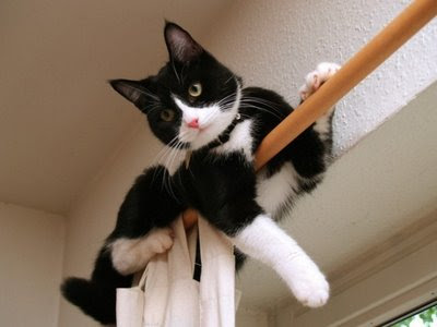 funny cats hanging on curtain drapes