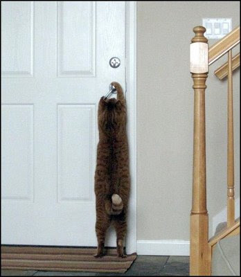funny smart cat photo taught how to open door buy using doorknob or handle pic