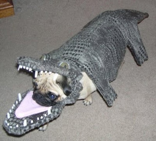 funny animal photos pug dog dressed as alligator in costume