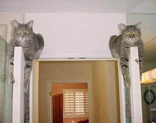 funny animal photos two cats resting on top of doors