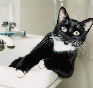 funny cat photos black and white modelling in bathroom washbasin