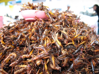 Insects for sale at the weekend market