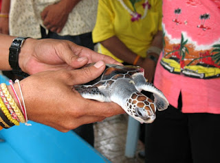 Songkran turtle release ceremony