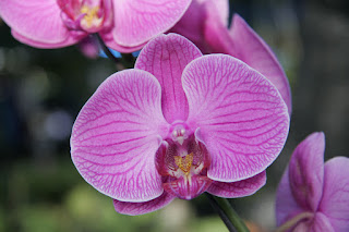 Orchid at Phuket Flower Fair
