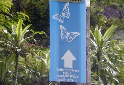 Butterfly release this way