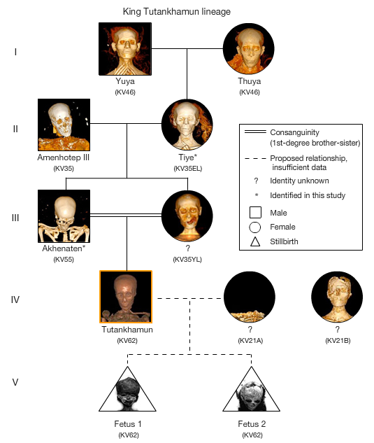 genetic abnormalities in ancient egyptian royal 2018-8-14 a 2015 study revealed little variation in body height among egyptian pharaohs compared to the general population, signaling the presence of extensive inbreeding among the ancient egyptian royalty.