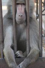O macaco sou eu?