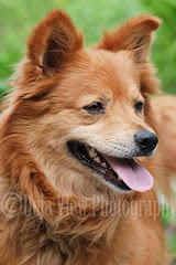 Foxy Was Adopted 11-3