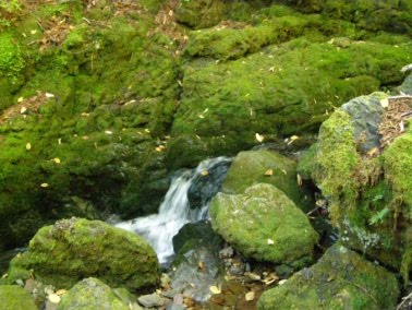 Mossy rocks in stream at Fundy National Park