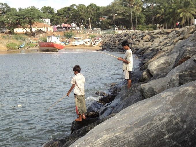 Catching Fish at hambantota fisher habour