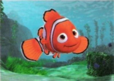 Foto Nemo