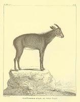 sumatra-14.jpg