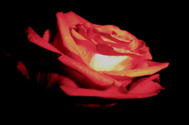 a beleza da flor...a luminosidade de um sorriso