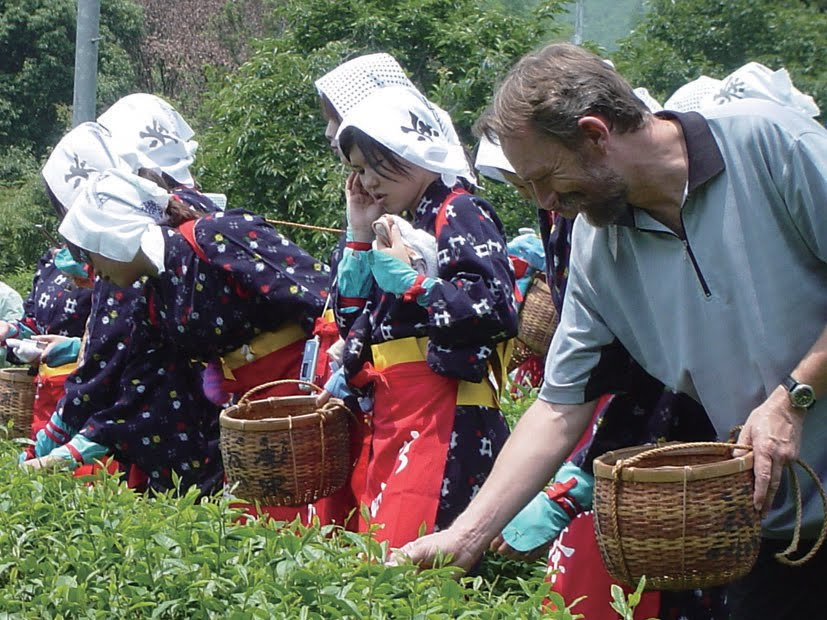 Japanese tea leaves picking!