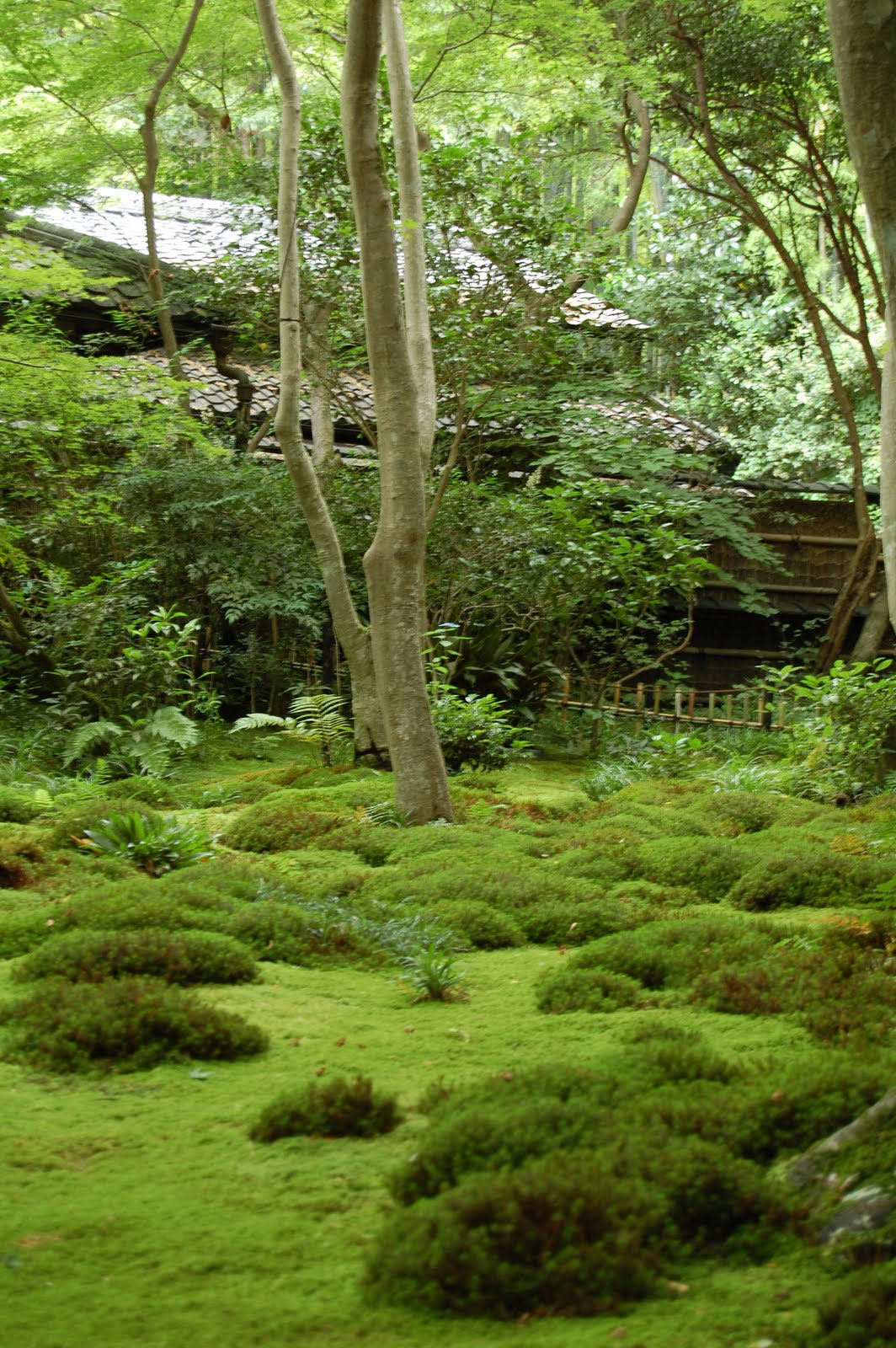 The best moss garden in Kyoto