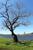 albero secco sulla città