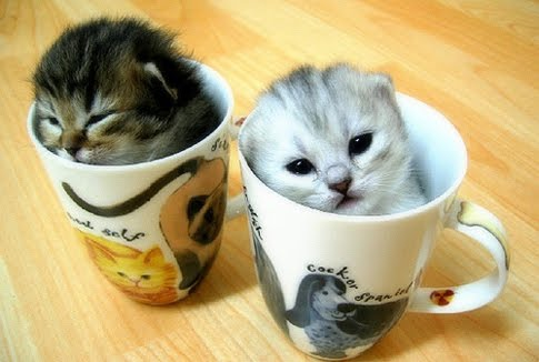 Kittens are always so cute and funny. These are some funny kitten ...