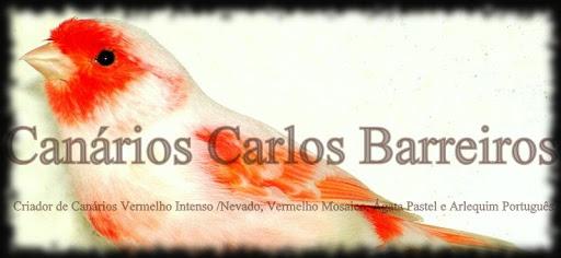 Canários Carlos Barreiros