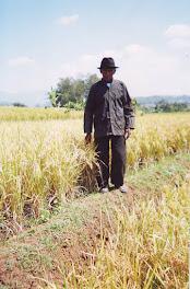 Petani dengan tanaman padi
