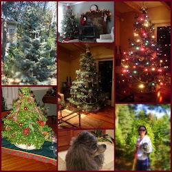 Live  Tree CHRISTMAS