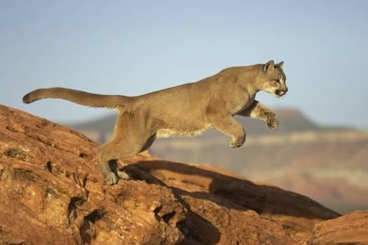 El Blog del Puma