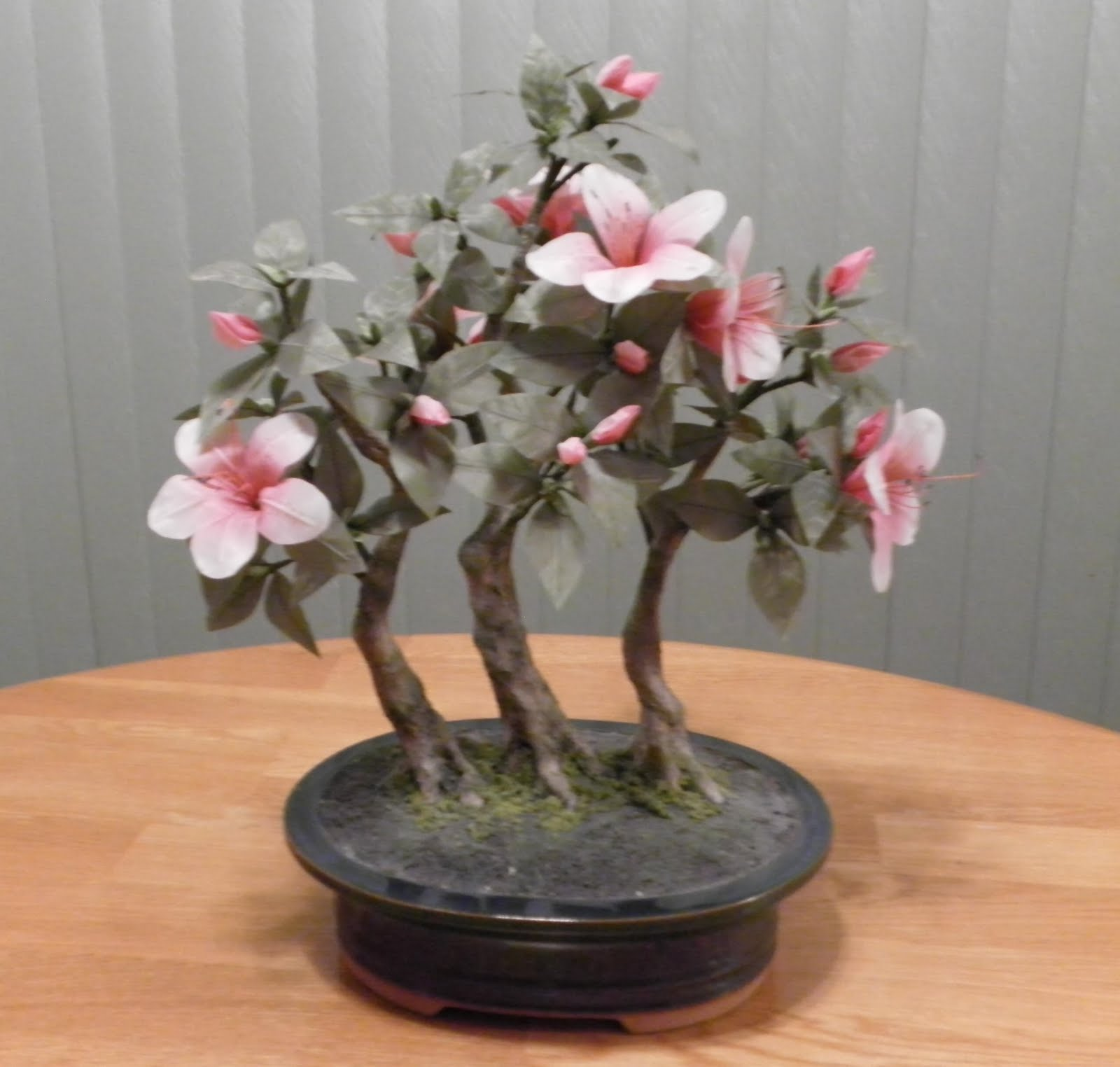 Amanda39s Blog Zokei Bonsai