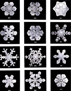 240px-SnowflakesWilsonBentley.jpg