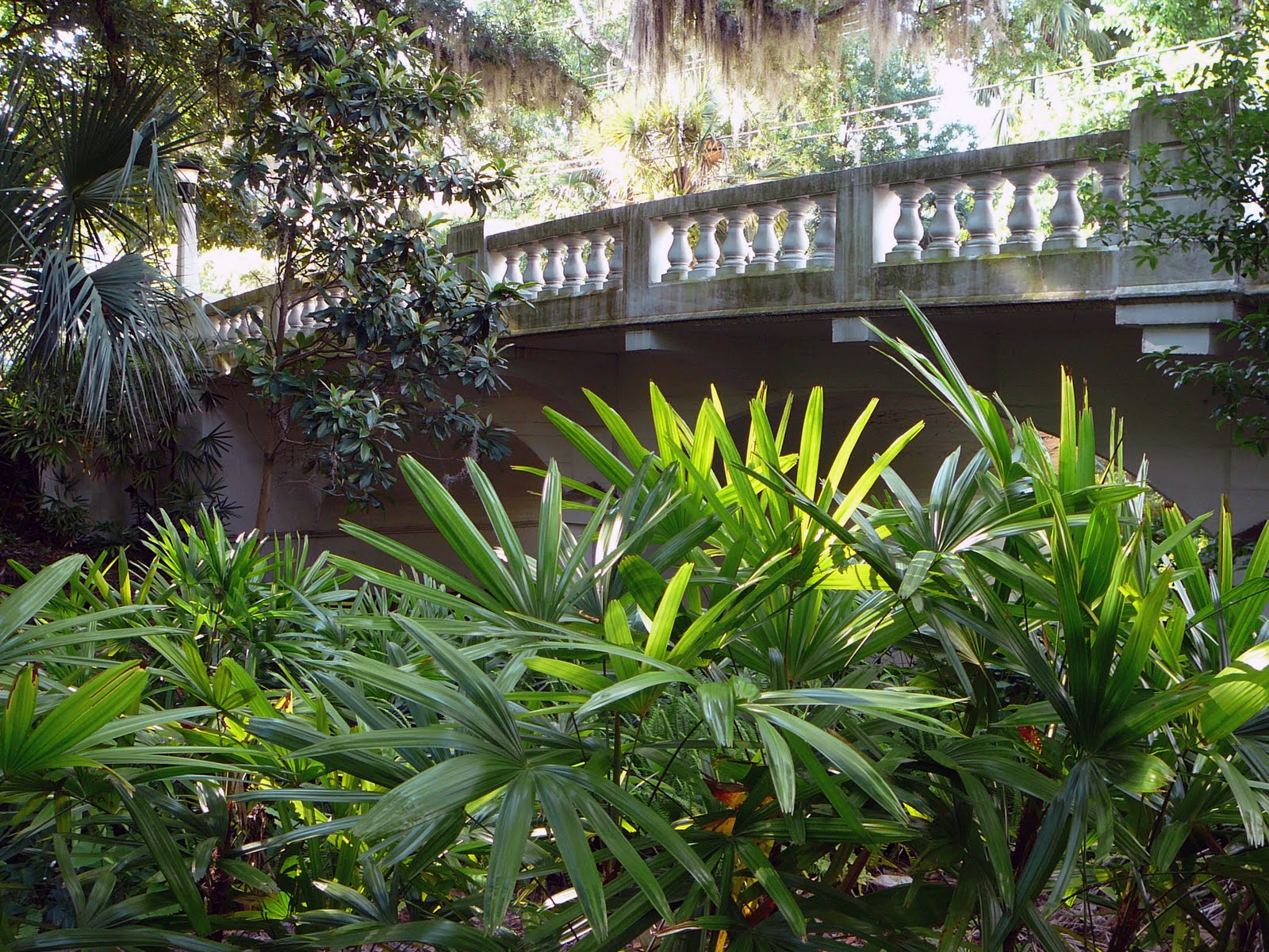 old florida dickson azalea park u0026 the washington street bridge