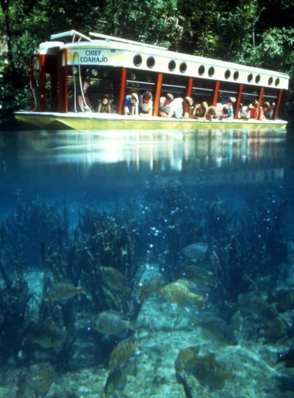 Crystal springs florida glass bottom boat