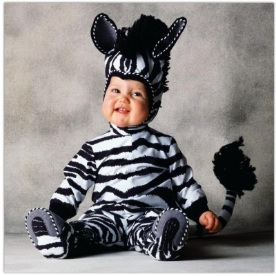 Cute baby like Africa zebra dressing picture
