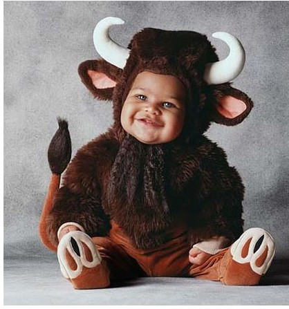 Cute baby like cow dressing picture