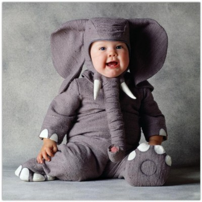 Cute baby like elephant dressing picture