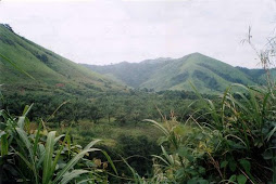 The Landscape of Cameroon
