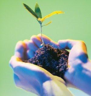 La importancia del cuidado de la ecologia